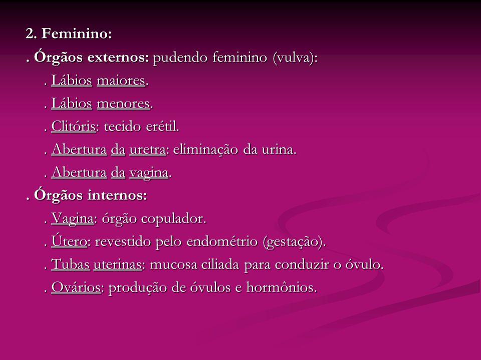2. Feminino: . Órgãos externos: pudendo feminino (vulva): . Lábios maiores. . Lábios menores. . Clitóris: tecido erétil.