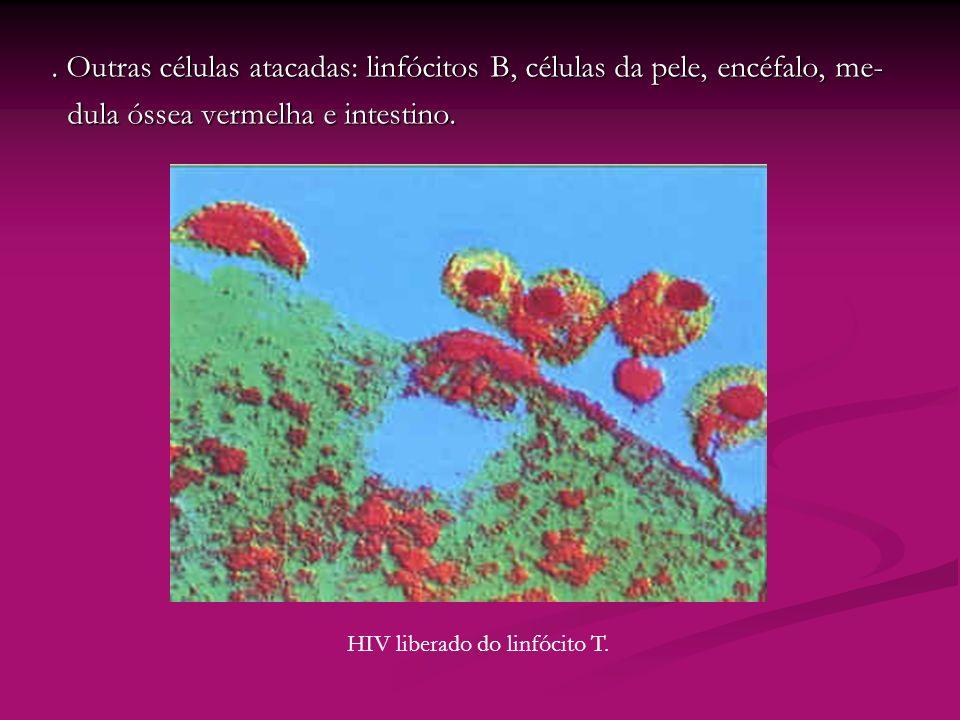 HIV liberado do linfócito T.