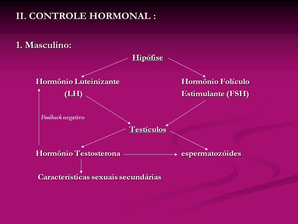 II. CONTROLE HORMONAL : 1. Masculino: Hipófise