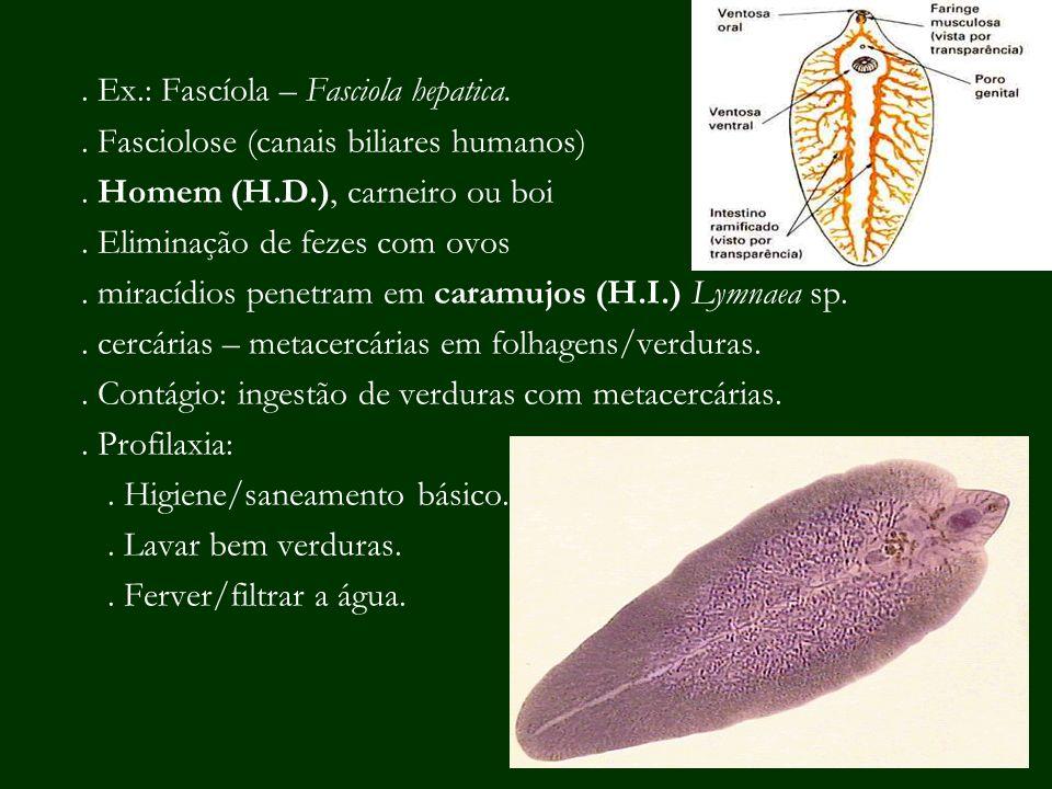 . Ex.: Fascíola – Fasciola hepatica.