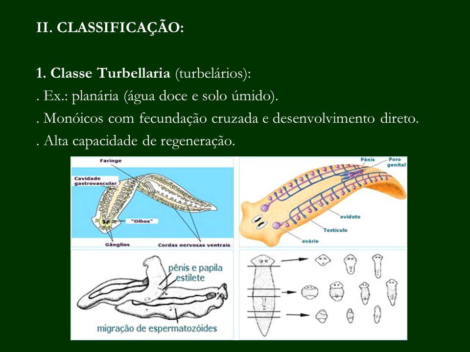 II. CLASSIFICAÇÃO: 1. Classe Turbellaria (turbelários): . Ex.: planária (água doce e solo úmido).