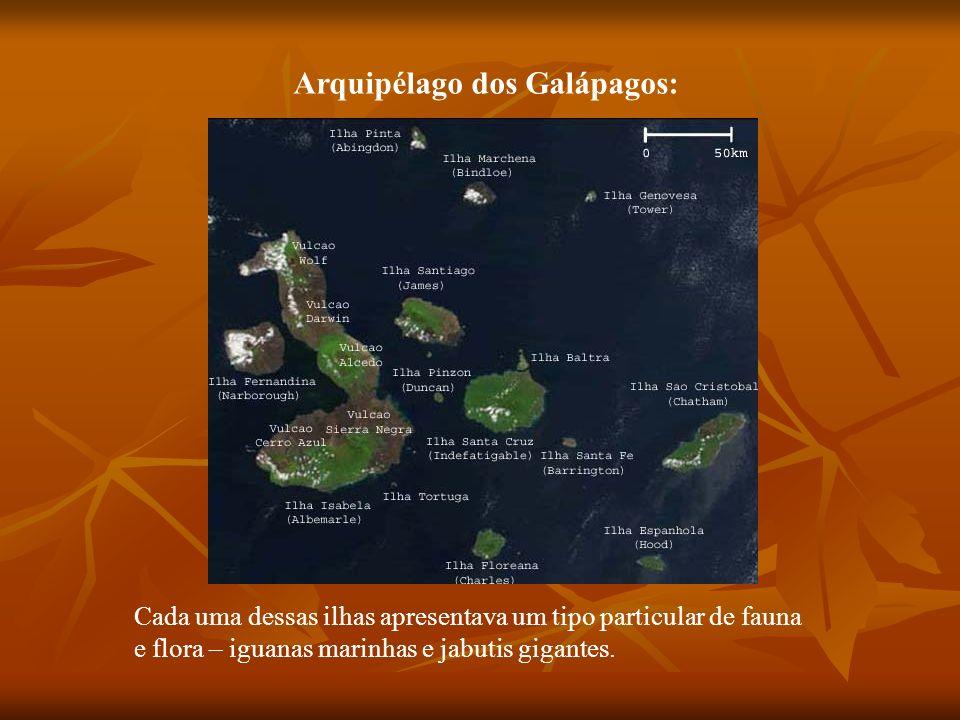 Arquipélago dos Galápagos: