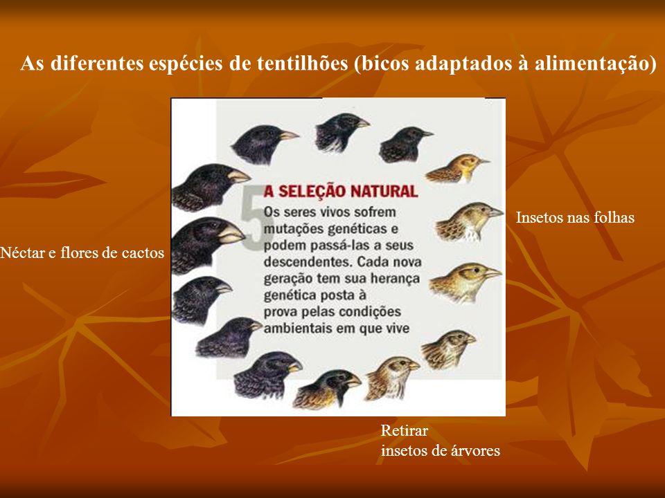 As diferentes espécies de tentilhões (bicos adaptados à alimentação)