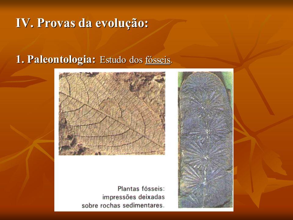 IV. Provas da evolução: 1. Paleontologia: Estudo dos fósseis.