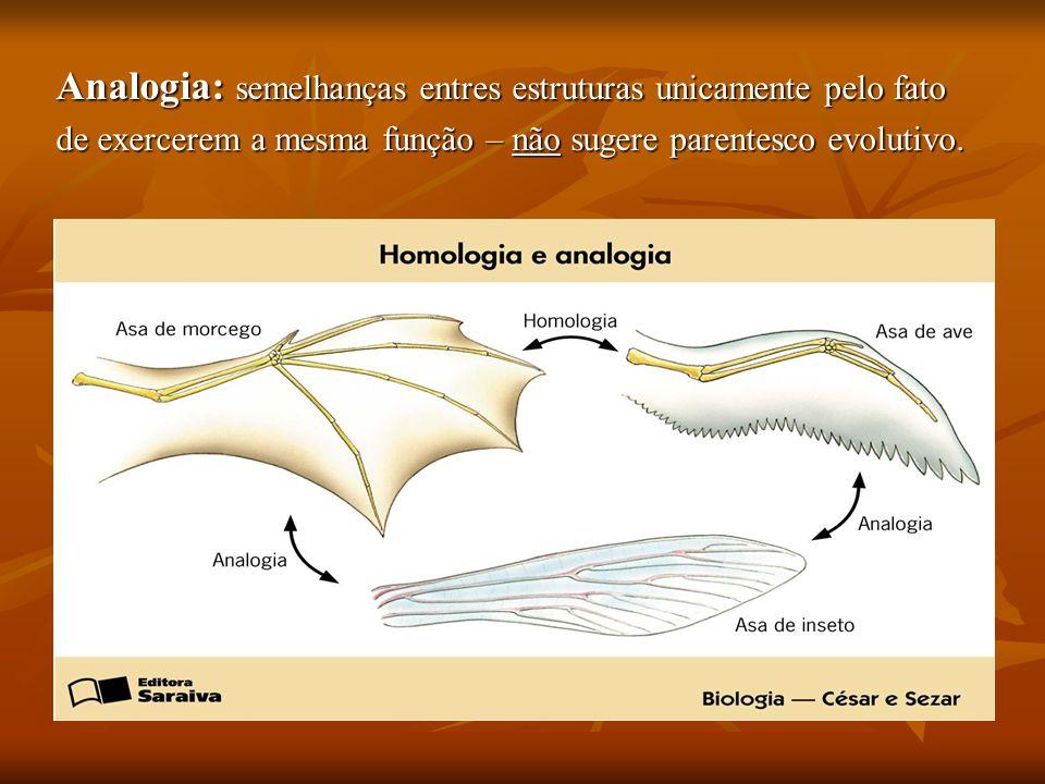 Analogia: semelhanças entres estruturas unicamente pelo fato