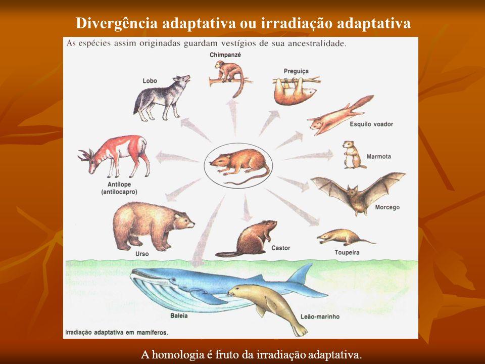 Divergência adaptativa ou irradiação adaptativa