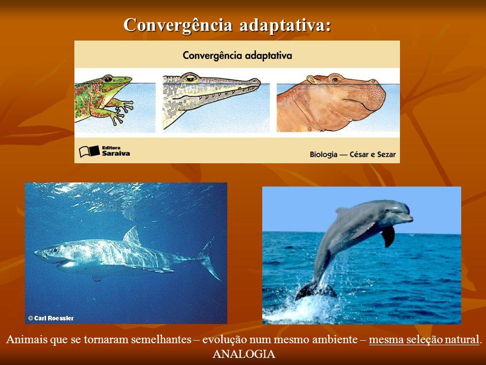 Convergência adaptativa: