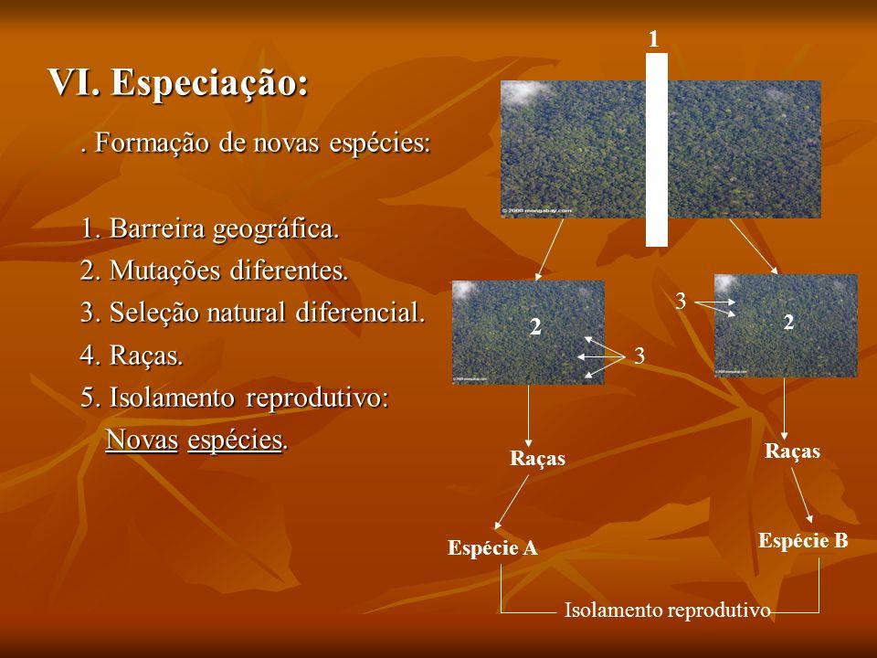 . Formação de novas espécies: