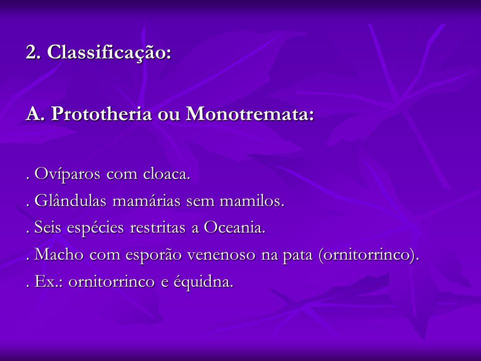 A. Prototheria ou Monotremata: