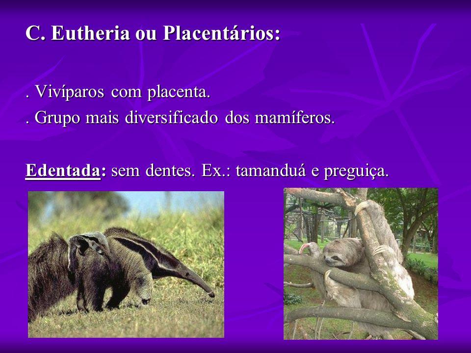 C. Eutheria ou Placentários: