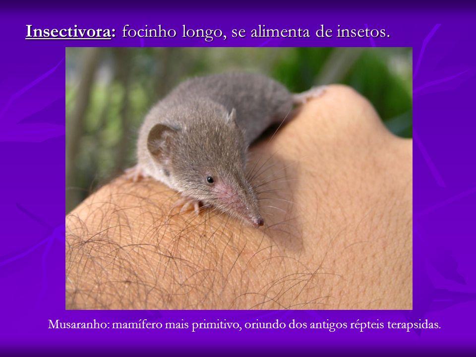 Insectivora: focinho longo, se alimenta de insetos.
