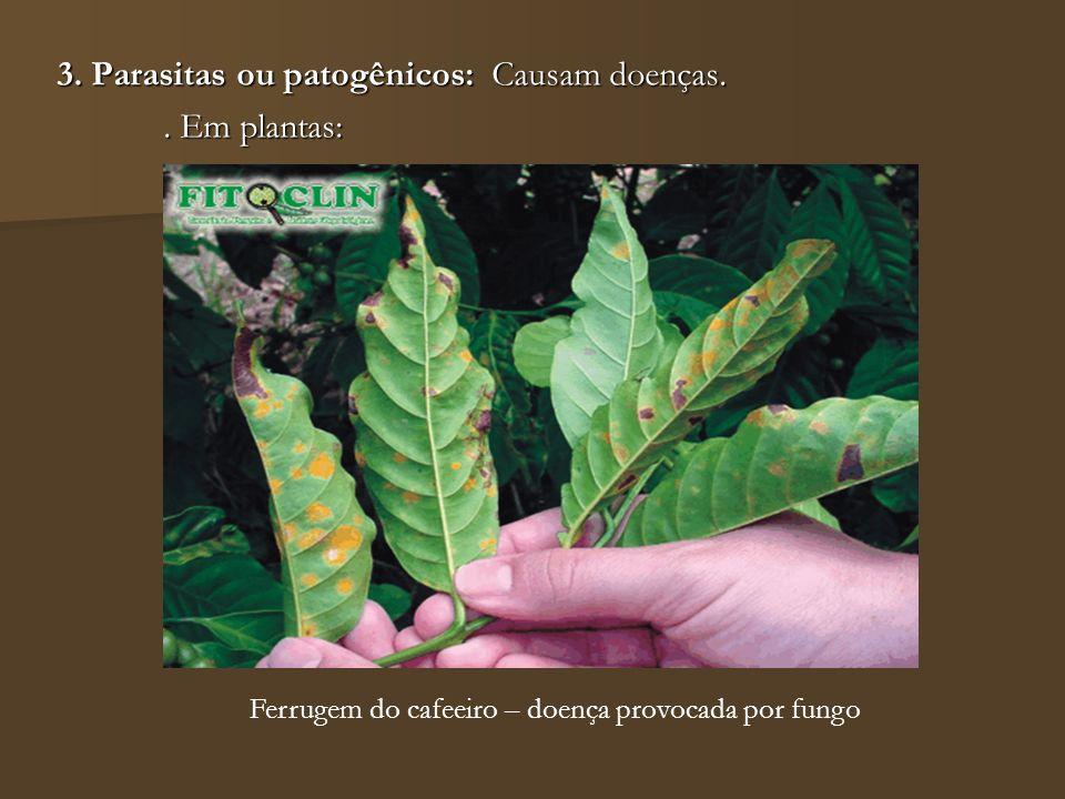3. Parasitas ou patogênicos: Causam doenças. . Em plantas: