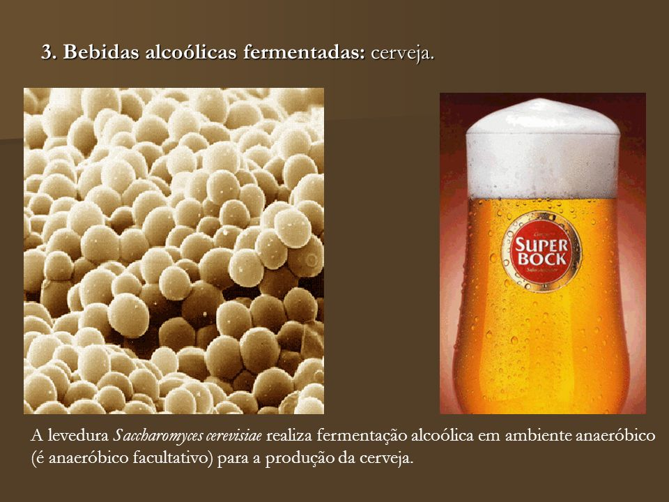 3. Bebidas alcoólicas fermentadas: cerveja.