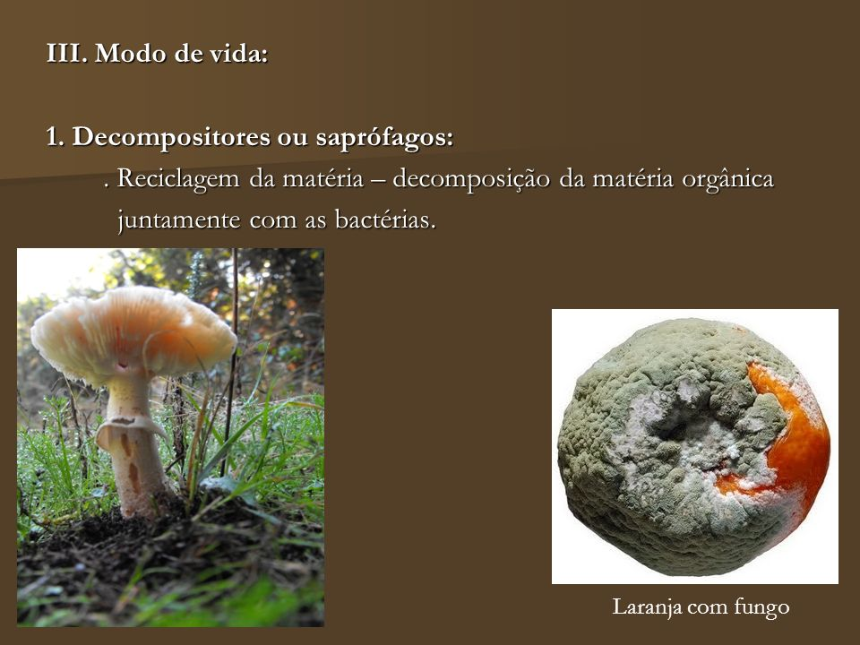 1. Decompositores ou saprófagos: