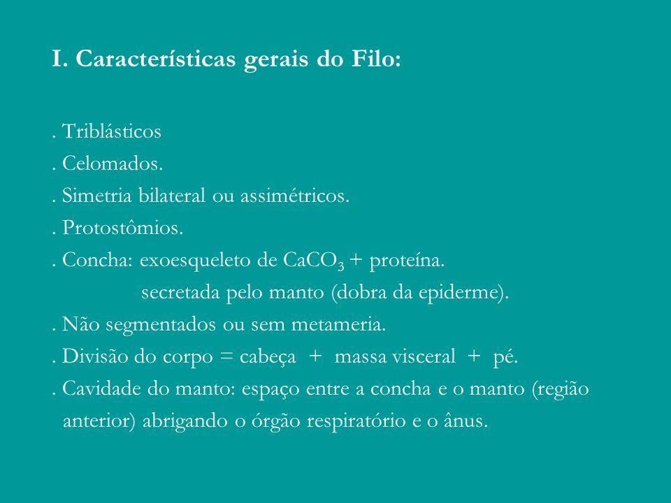 I. Características gerais do Filo: