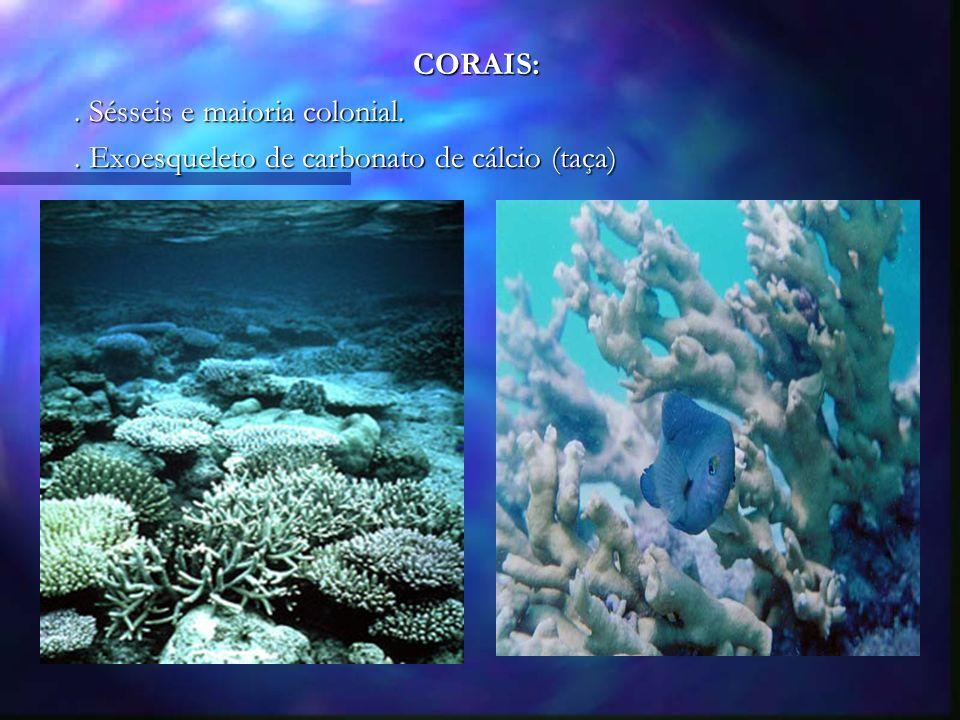 CORAIS: . Sésseis e maioria colonial. . Exoesqueleto de carbonato de cálcio (taça)