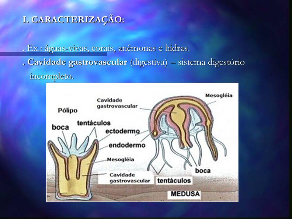 I. CARACTERIZAÇÃO: . Ex.: águas-vivas, corais, anêmonas e hidras. . Cavidade gastrovascular (digestiva) – sistema digestório.