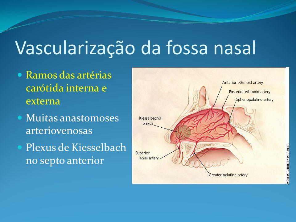 Vascularização da fossa nasal