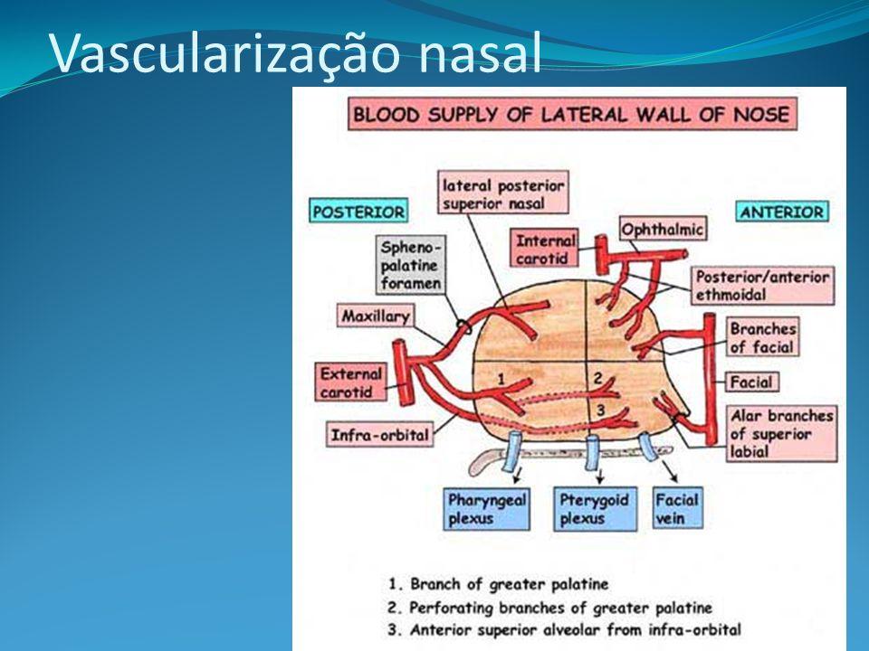 Vascularização nasal