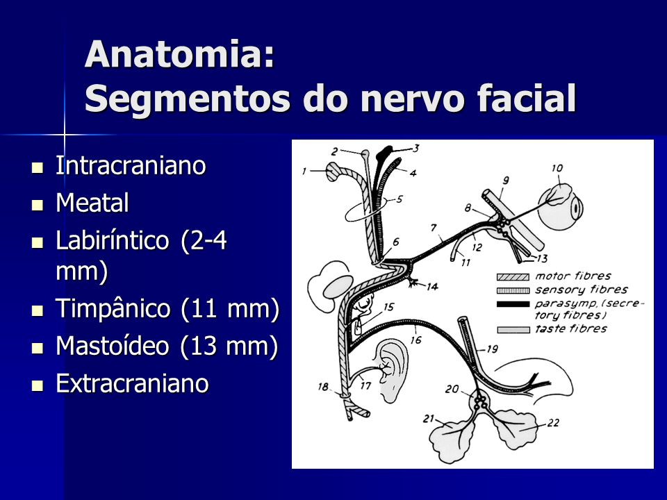 Anatomia: Segmentos do nervo facial