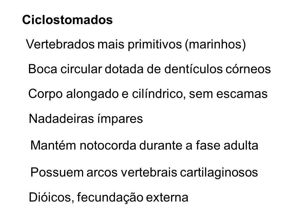 Ciclostomados Vertebrados mais primitivos (marinhos) Boca circular dotada de dentículos córneos. Corpo alongado e cilíndrico, sem escamas.