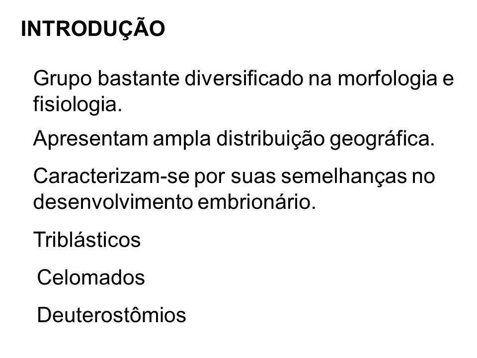 INTRODUÇÃO Grupo bastante diversificado na morfologia e. fisiologia. Apresentam ampla distribuição geográfica.