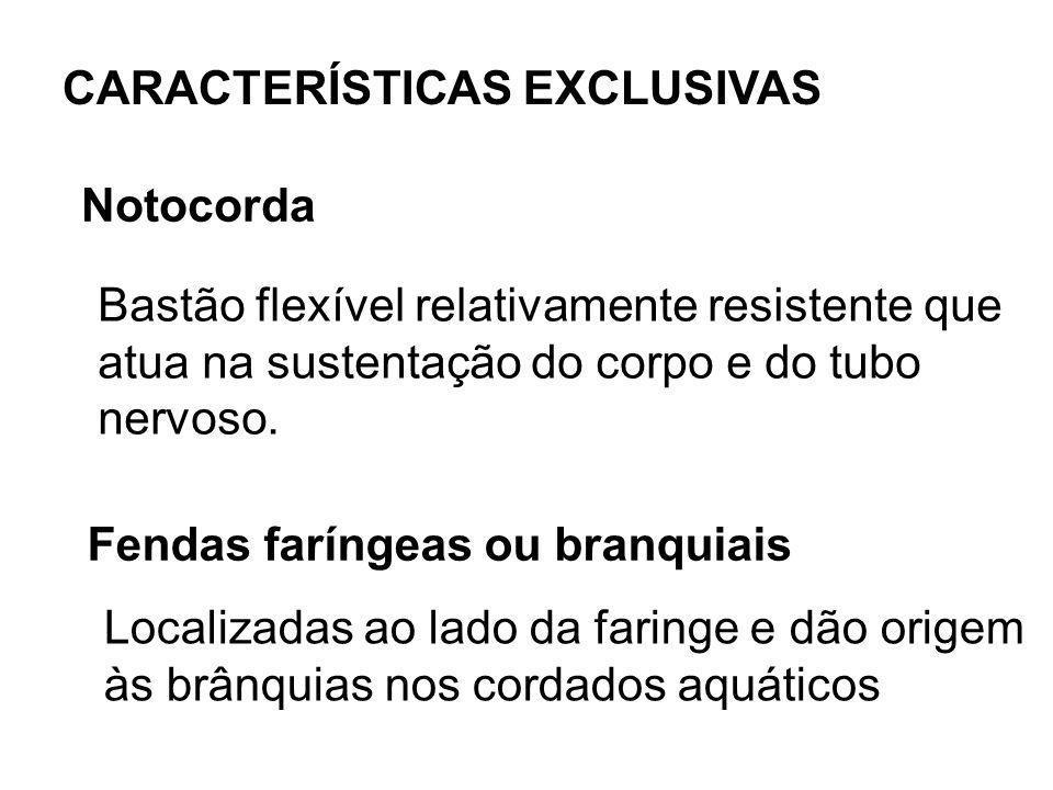 CARACTERÍSTICAS EXCLUSIVAS
