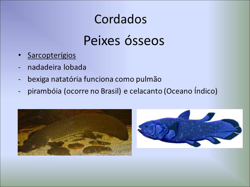 Peixes ósseos Cordados Sarcopterígios nadadeira lobada