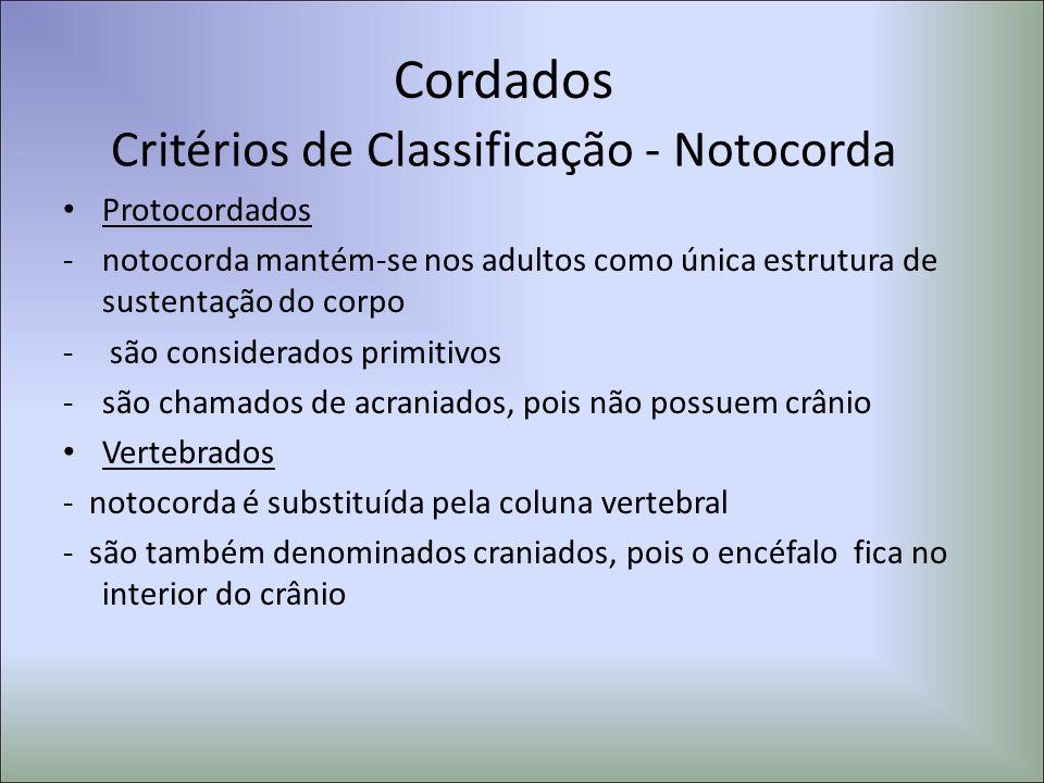 Critérios de Classificação - Notocorda