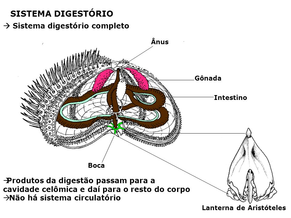 SISTEMA DIGESTÓRIO  Sistema digestório completo