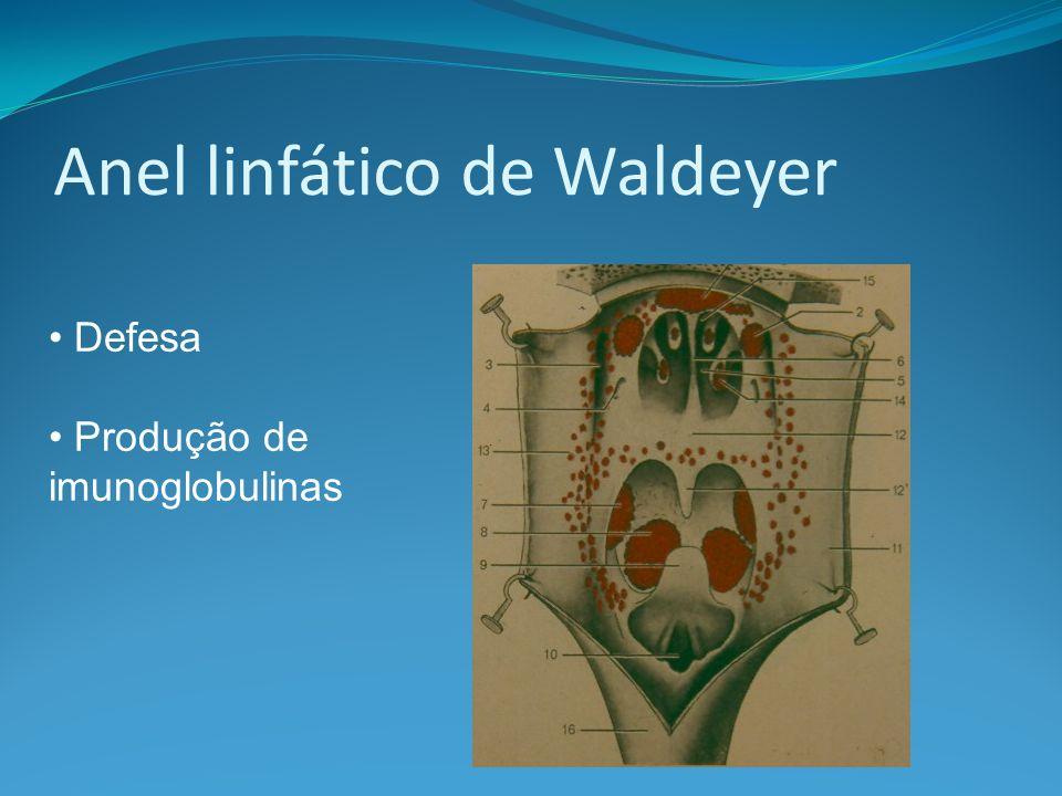 Anel linfático de Waldeyer