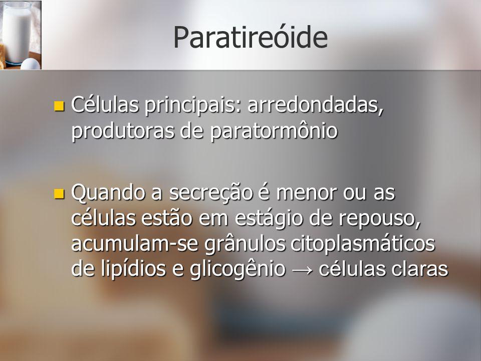 Paratireóide Células principais: arredondadas, produtoras de paratormônio.
