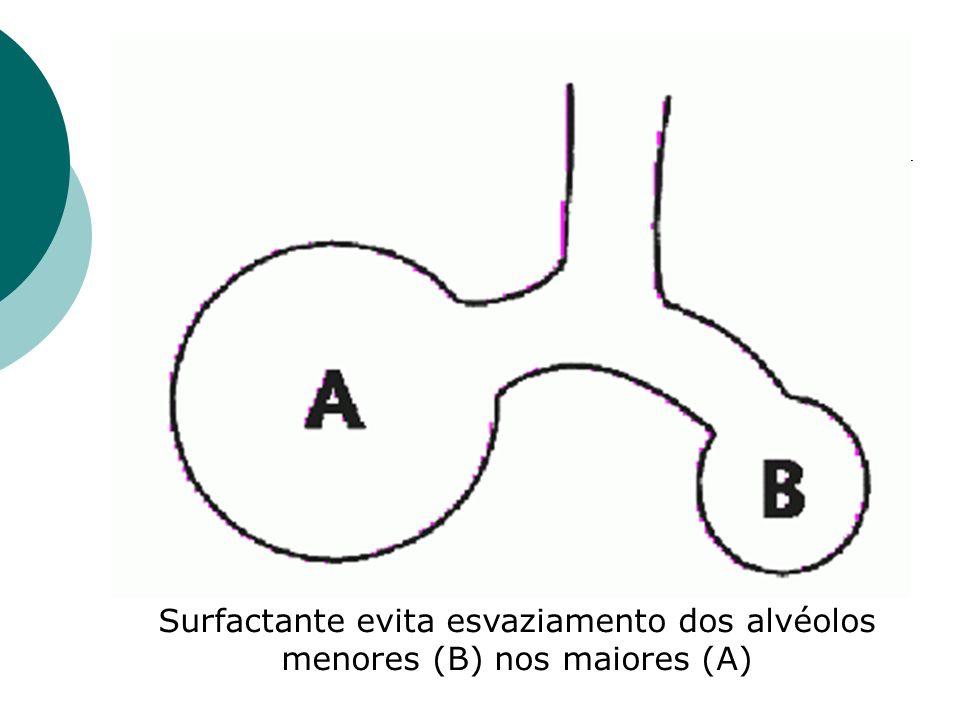 Surfactante evita esvaziamento dos alvéolos menores (B) nos maiores (A)