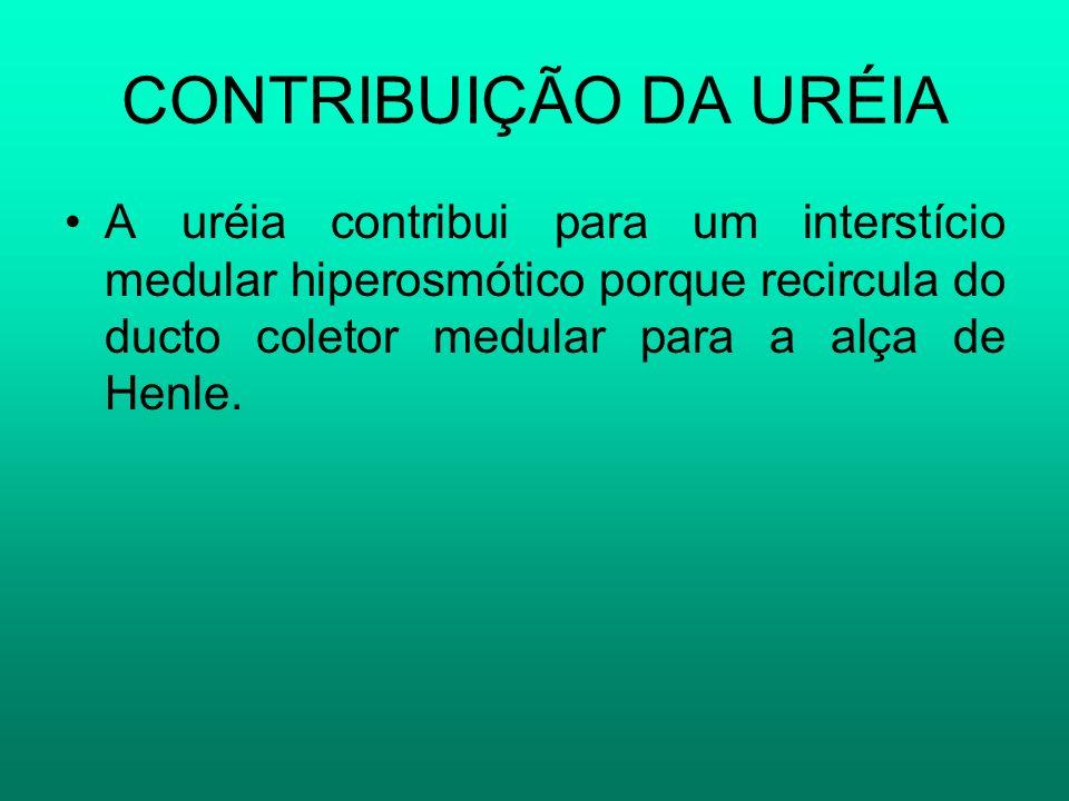 CONTRIBUIÇÃO DA URÉIAA uréia contribui para um interstício medular hiperosmótico porque recircula do ducto coletor medular para a alça de Henle.