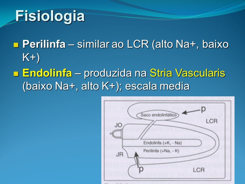 Fisiologia Perilinfa – similar ao LCR (alto Na+, baixo K+)