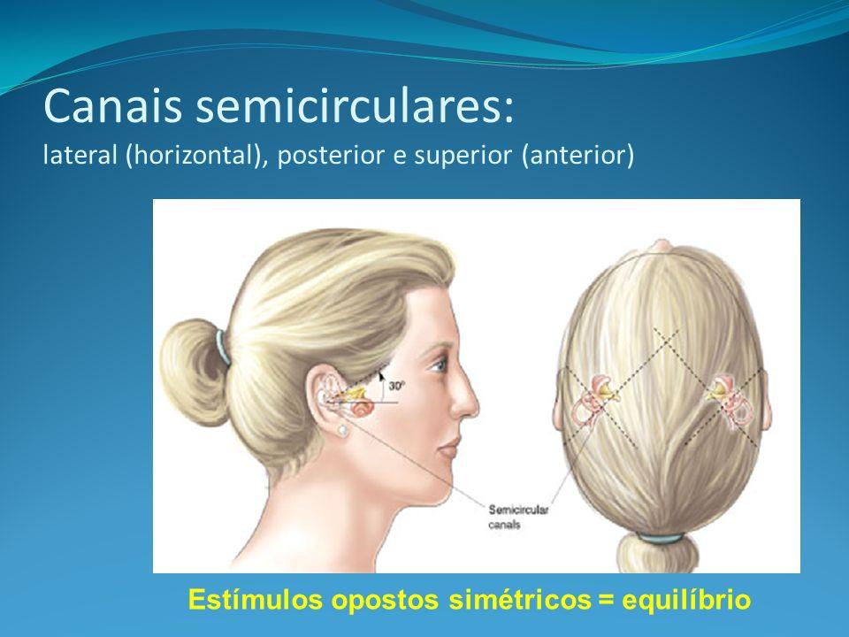 Canais semicirculares: lateral (horizontal), posterior e superior (anterior)