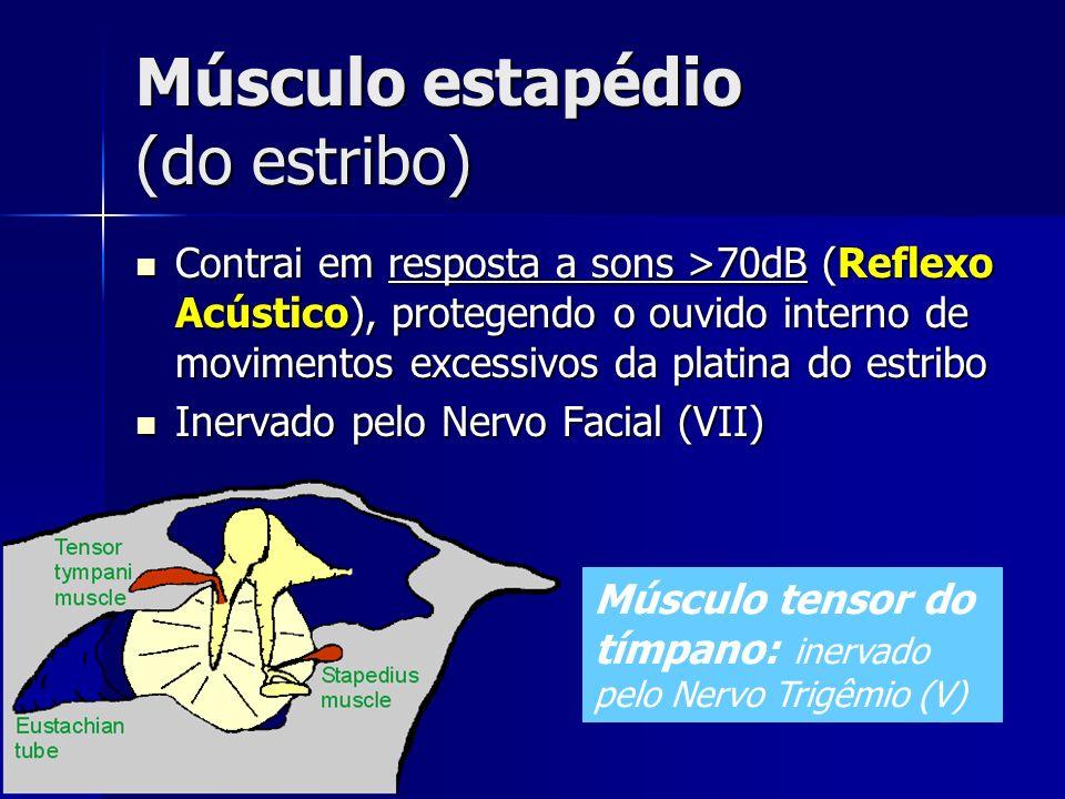 Músculo estapédio (do estribo)