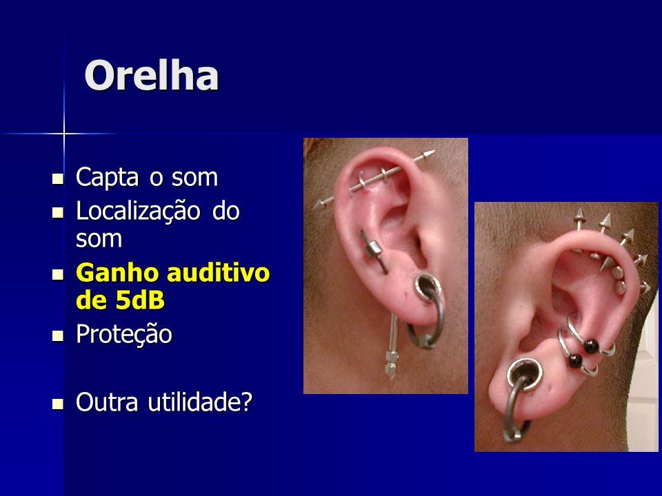 Orelha Capta o som Localização do som Ganho auditivo de 5dB Proteção