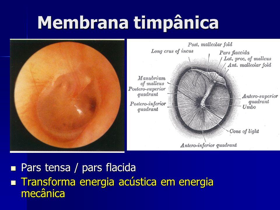 Membrana timpânica Pars tensa / pars flacida