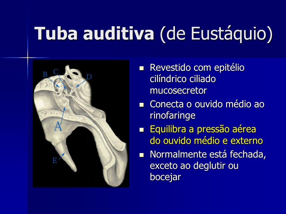 Tuba auditiva (de Eustáquio)