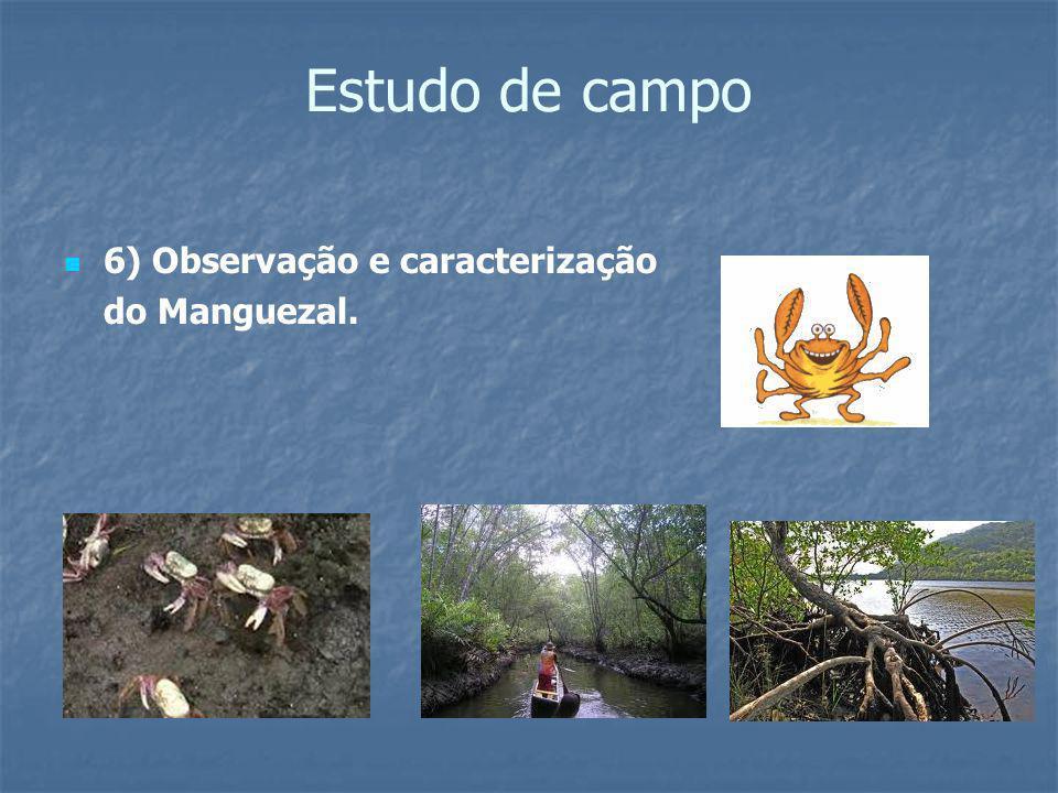 Estudo de campo 6) Observação e caracterização do Manguezal.