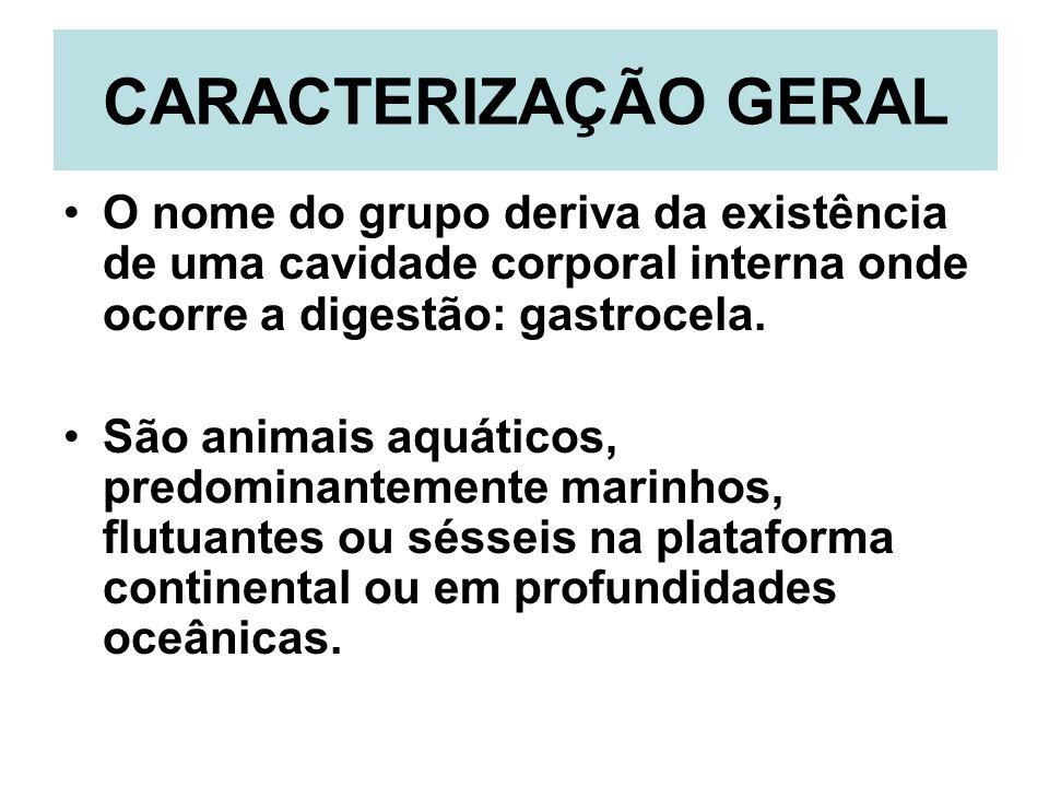 CARACTERIZAÇÃO GERAL O nome do grupo deriva da existência de uma cavidade corporal interna onde ocorre a digestão: gastrocela.