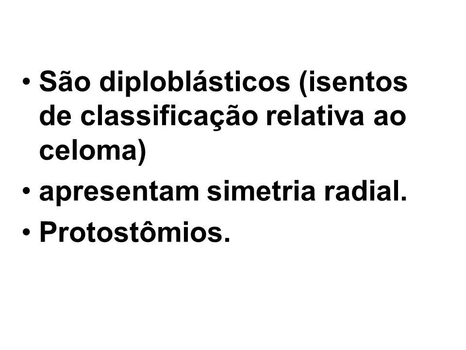 São diploblásticos (isentos de classificação relativa ao celoma)
