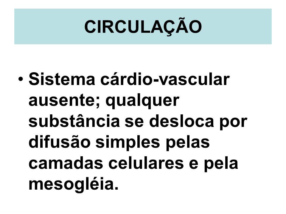 CIRCULAÇÃOSistema cárdio-vascular ausente; qualquer substância se desloca por difusão simples pelas camadas celulares e pela mesogléia.