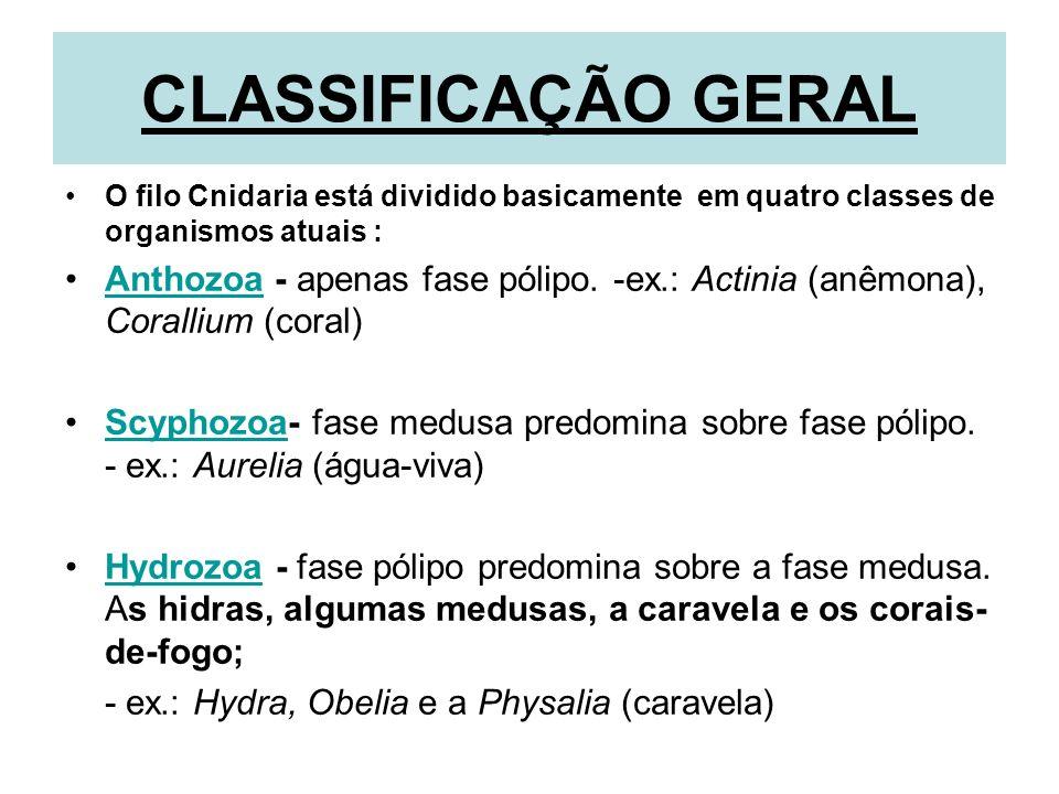 CLASSIFICAÇÃO GERAL O filo Cnidaria está dividido basicamente em quatro classes de organismos atuais :