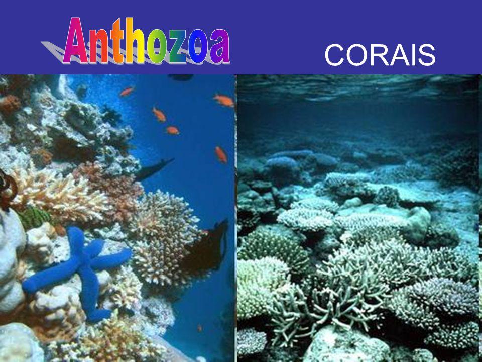 CORAIS Anthozoa