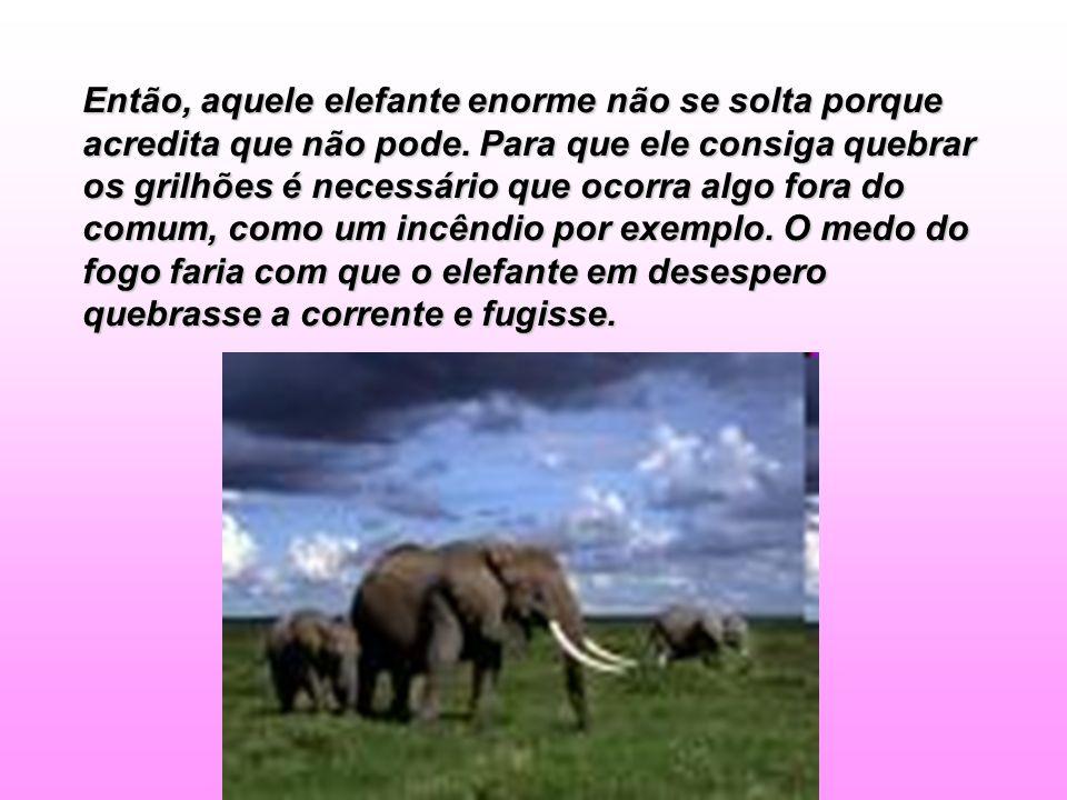 Então, aquele elefante enorme não se solta porque acredita que não pode.