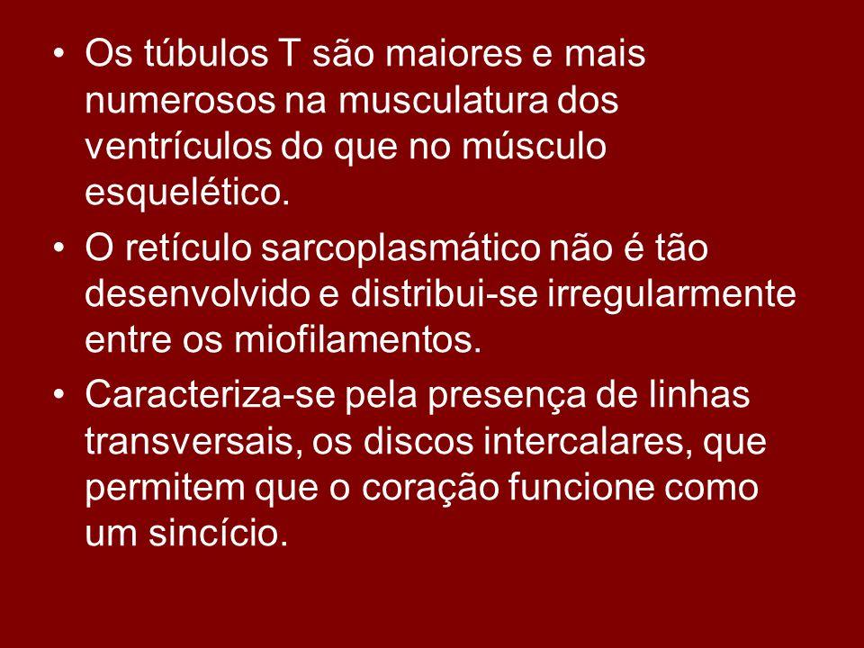 Os túbulos T são maiores e mais numerosos na musculatura dos ventrículos do que no músculo esquelético.