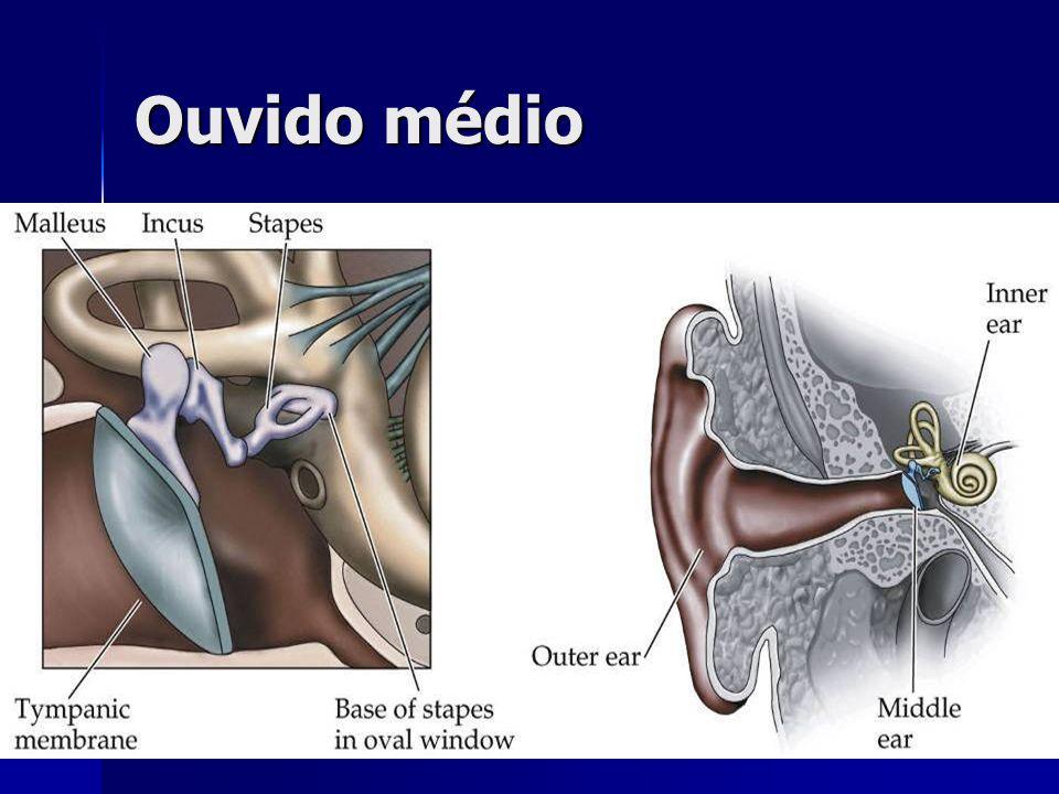 Ouvido médio neuro3e-fig-12-03-2.jpg