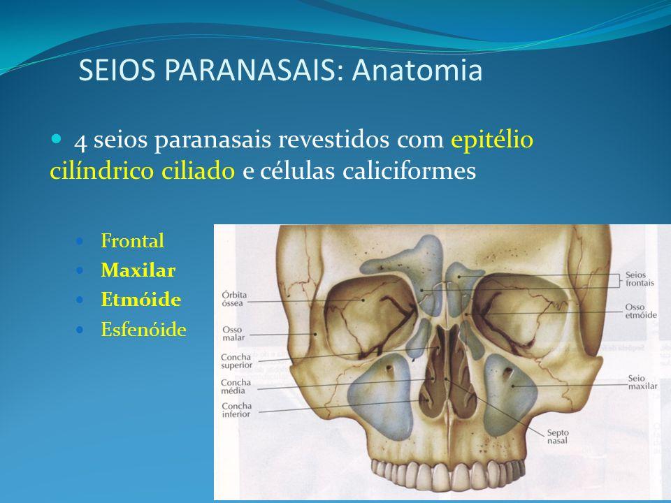 SEIOS PARANASAIS: Anatomia